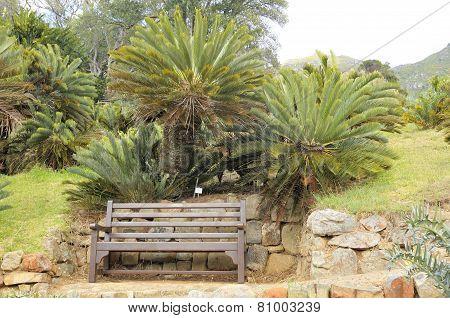 Bench Beneath Cycads In Kirstenbosch