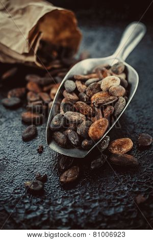 cocoa beans in a  scoop