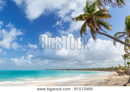 Palm Tree On Sandy Beach. Coast Of Atlantic Ocean