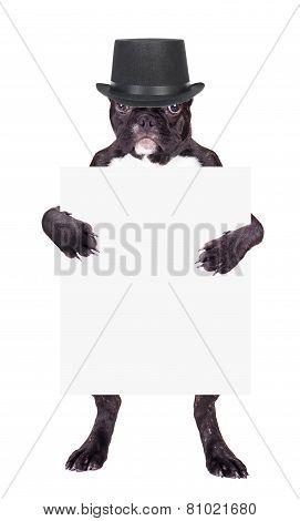 French Bulldog Puppy In Cylinder