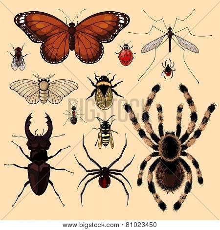 Set of realistic images of insects (raster version)