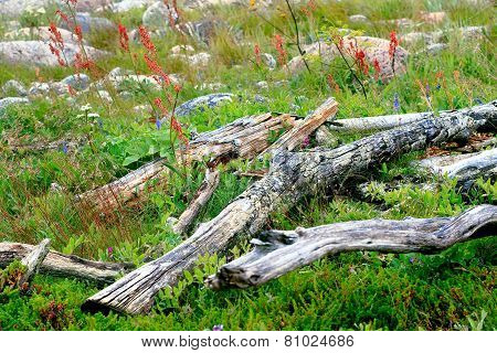 Branches piled up in the green grass