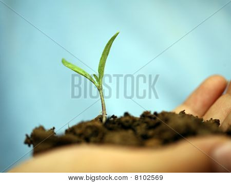 Sapling Background