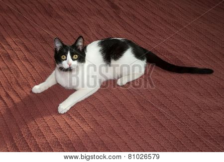 Black And White Cat Lying On Bedspread