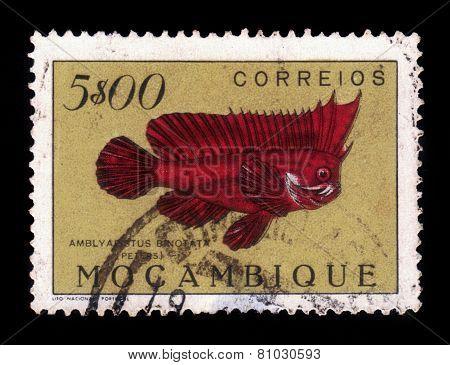 Redskinfish, Ablabys Binotatus