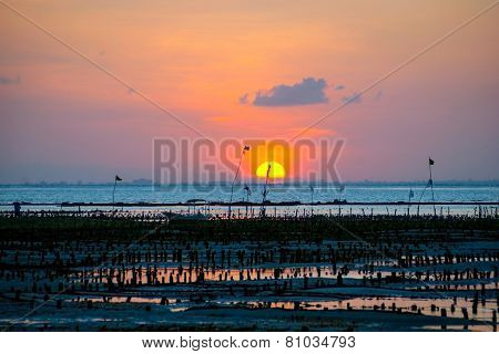 Algae Farm Field In Sunset, Indonesia