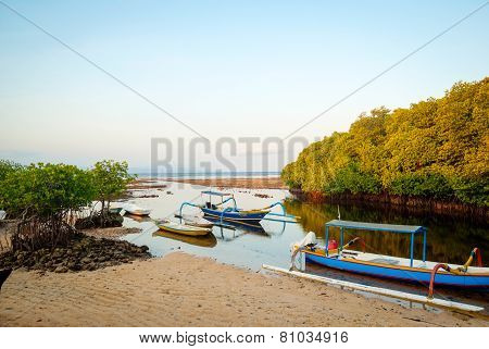 Mangrove Forest At Nusa Lembongan Island, Indonesia