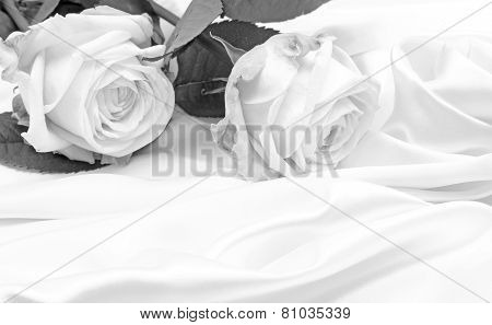 Beautiful White Roses In Black And White