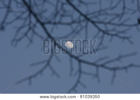 Full Moon Shining Through Black Branches In Night