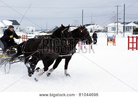 Horses Obstacle Cone Driving