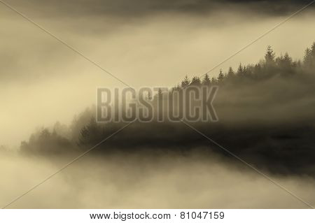 misty morning in Vosges mountains, France