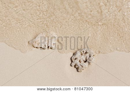 The Broken Corals Washed Up To Shoreline Sand Beach.
