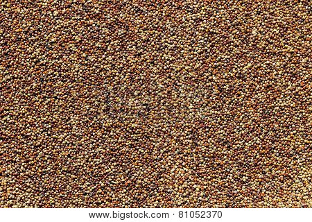 finger millet background