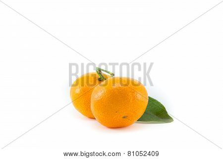 Citrus fruits arranged on white background.