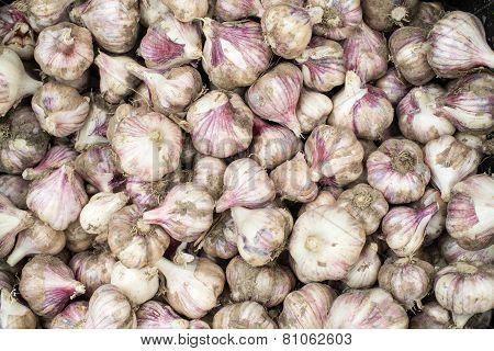 Fresh Bulbs Of Garlic. Background