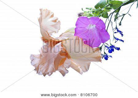 Iris, Petunia, Lobelia
