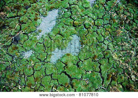 Texture Of Green Moss