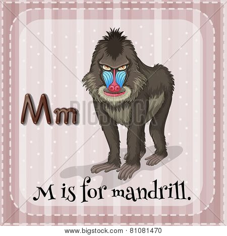 Illustration of a letter M is for mandrill