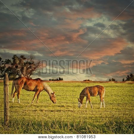 Horse And Colt Grazing