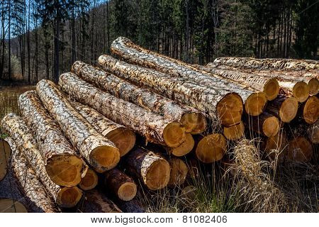 trees in a forest were recut in wood working. natural, energy-friendly and sustainable heat