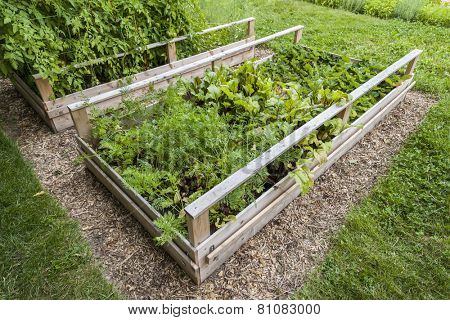 Backyard vegetable garden in wooden raised beds or boxes