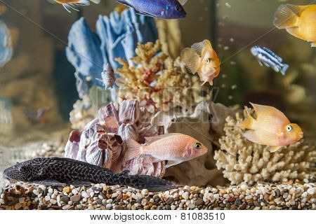 Home Aquarium