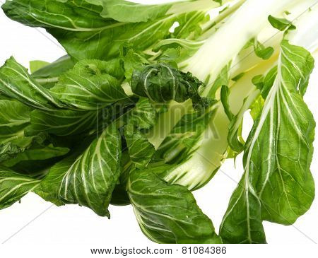Isolated bok choy  a Chinese vegetable
