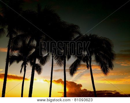 Sun setting between palms