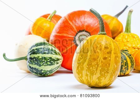 Colorful pumpkins. Halloween pumpkins.
