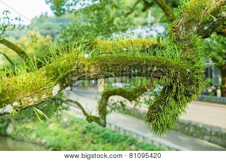 Many Parasitic On Tree Trunk Look Abundant Natural