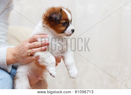 Woman Holding Adorable Puppy