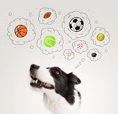 stock photo of collie  - Cute black and white border collie thinking about balls in a thought bubbles above her head - JPG