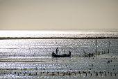 foto of algae  - Algae farm field in Nusa Lembongan Indonesia - JPG
