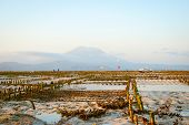 image of algae  - Algae farm field in Nusa Lembongan Indonesia - JPG
