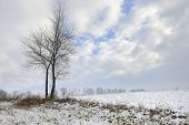 image of snow clouds  - Tree in snow covered field with clouds clearing after winter snow storm - JPG