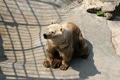 stock photo of zoo  - Bears in the zoo park - JPG
