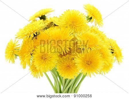 Bouquet Of Dandelions.