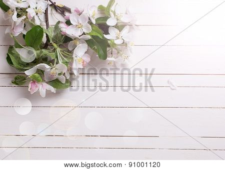 Background  With Apple Blossom