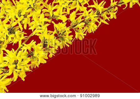 Decoration of blooming forsythia twigs