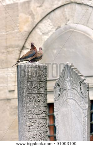 Ottoman tombstone and dove on pending