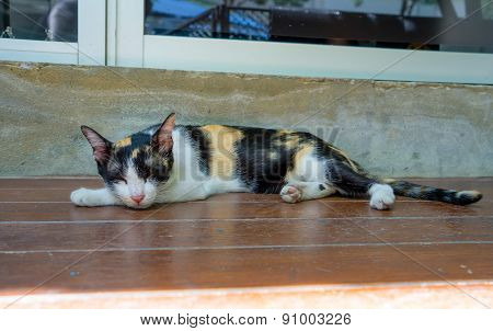 Sleeping Cat On A Wodden Floor
