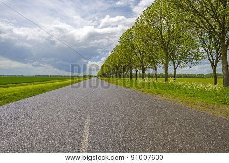 Country road through a rural landscape in spring