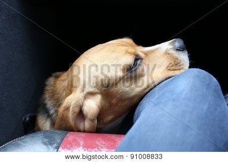 Funny cute dog close up