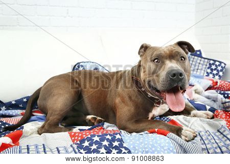 Cute dog lying on sofa, on home interior background