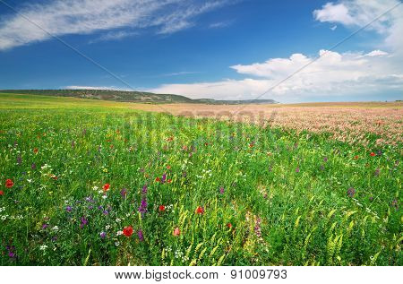 Spring meadow of flowers. Composition of nature.