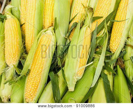 Fresh corn on cob