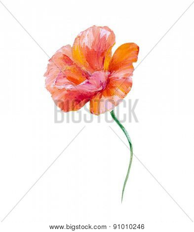 Poppy isolated on white, oil painting