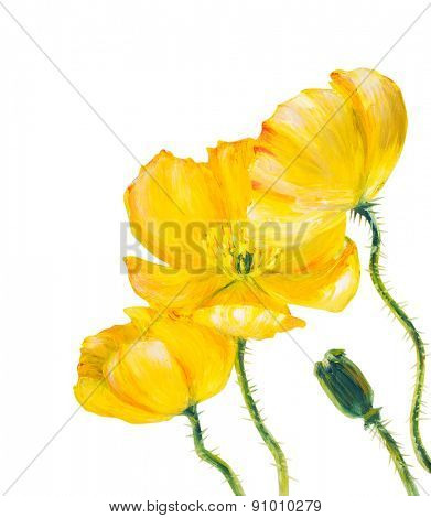 Yellow Poppy isolated on white, oil painting