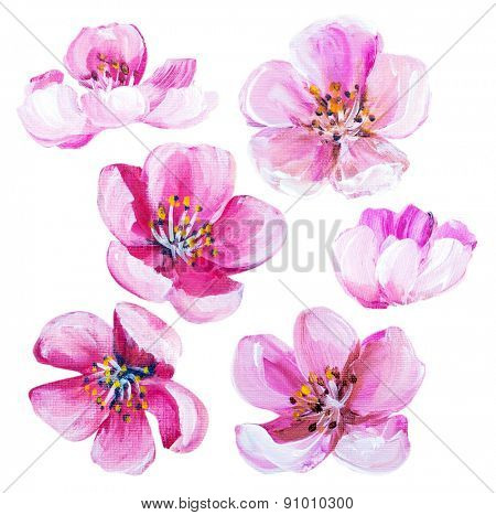 Sakura spring flowers isolated on white. Oil painting
