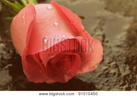 pink rose on a stone background, toned image